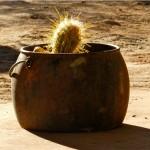 _0007_tl-atacama_0030_Cactus OK
